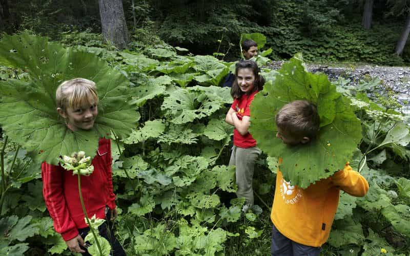 Kinder Abenteuertag (c) Christoph Lingg - Bregenzerwald Tourismus